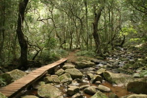 stream with bridge